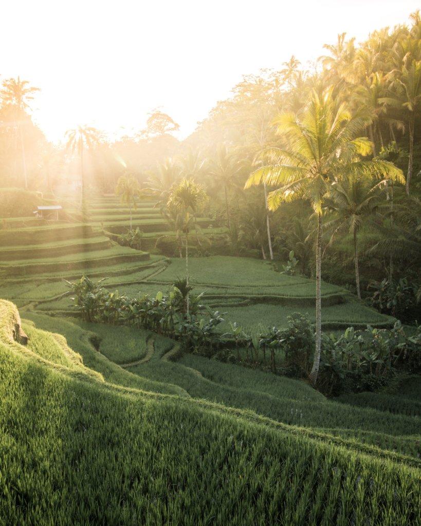 Rijstterrassen van Bali
