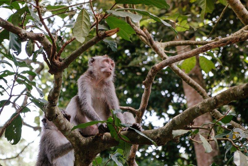 Ontdek het monkey forest in Ubud