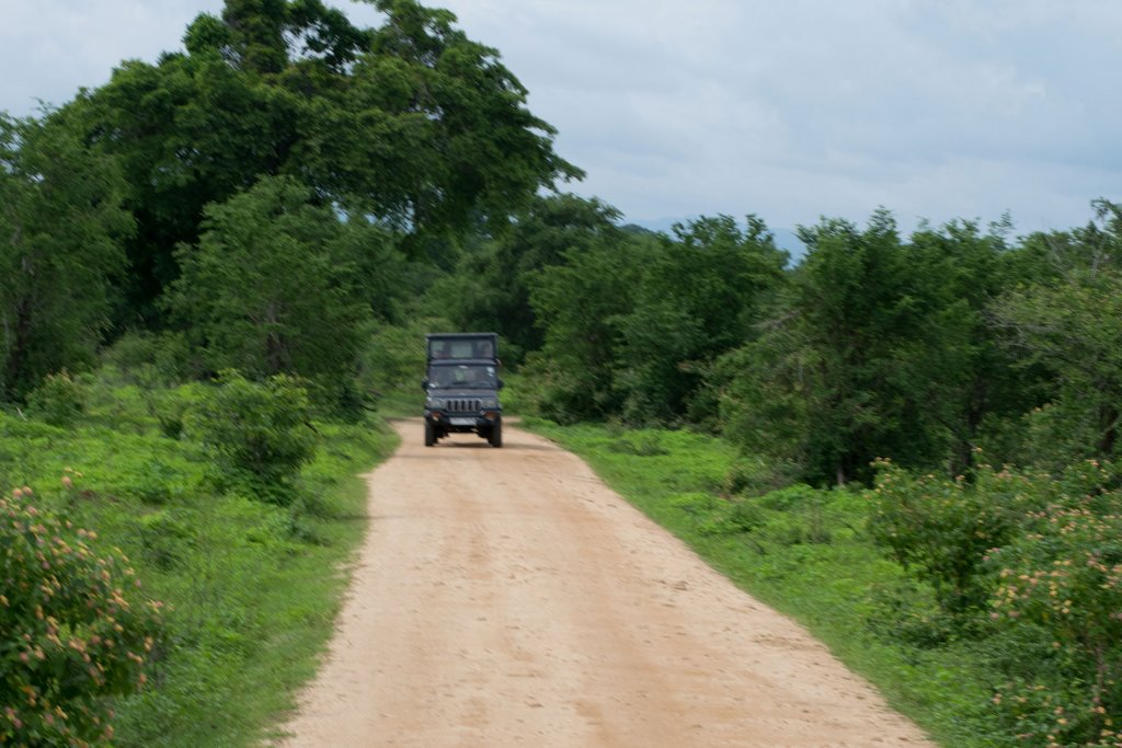 Jeepsafari in Yala National Park