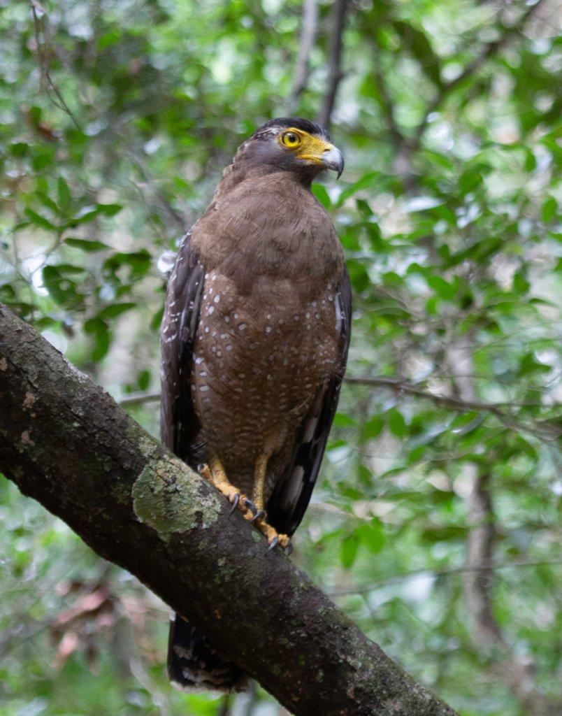 Sri Lanka Wildpatu