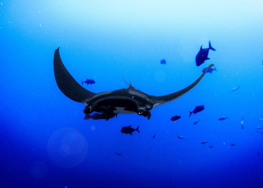 Snorkelen Bali - Mantra roggen