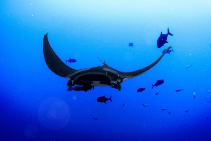 Nusa Lembongan snorkelen: jouw kans om een manta rog te spotten