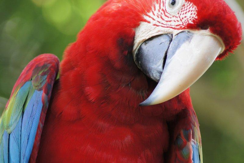 9 beste dierenparken in Bali (zie apen, vogels, en reptielen)