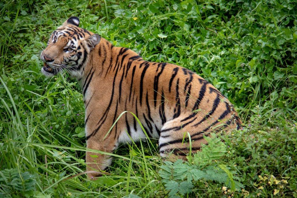 dierenparken in Bali
