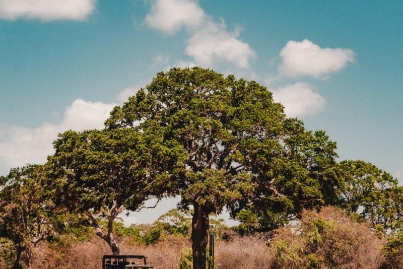 Op Jeepsafari in Yala National Park | Spot olifanten, luipaarden & vogels