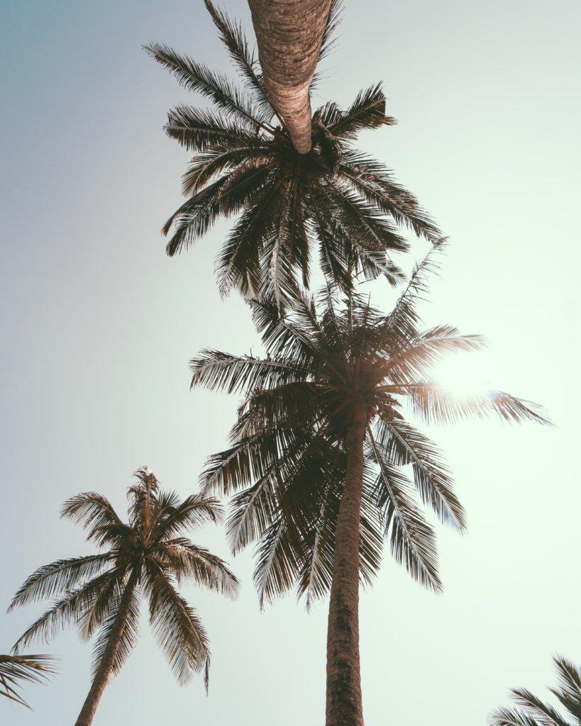 Palmbomen van Hikkaduwa