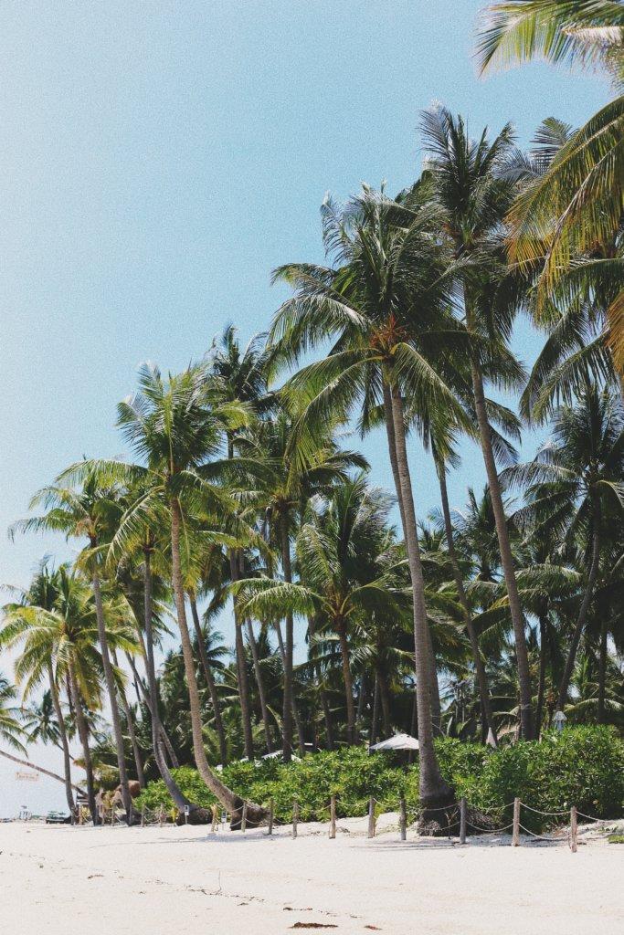 Thailand beste reistijd