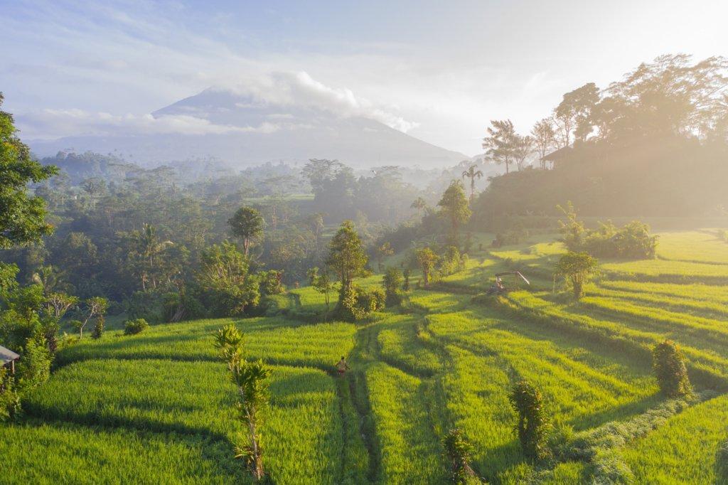 De rijstvelden van Bali